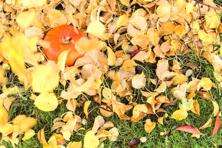Beautiful autumnal small single orange pumpkin covered in light yellow falling leaves. Top view. Creative autumn harvest background. Copy space. Fall vibes. Autumn patterns 版權商用圖片
