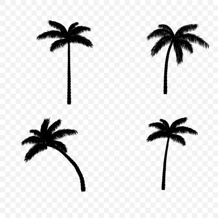 Palm tree black silhouette set on transparent background. Vector illustration