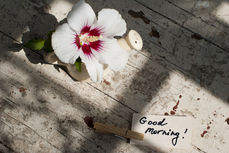good morning: Pictures of sunny summer morning with beautiful flower, delicious turkish coffee on a rusted old table with decorations.