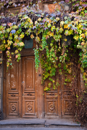 crack climbing: Cascades of autumn colored Ivy leaves falling down the old wooden door of the old half ruined house in Tbilisi, narrow street. Stock Photo