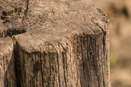 old wooden stump in cracks close-up