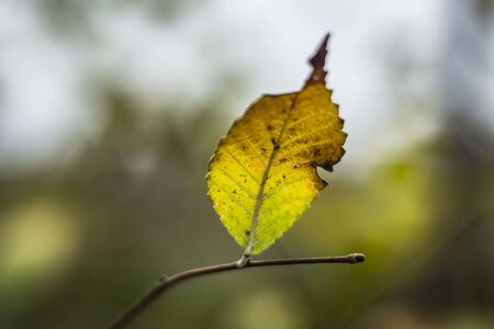 autumn leaf with blurry bokeh background