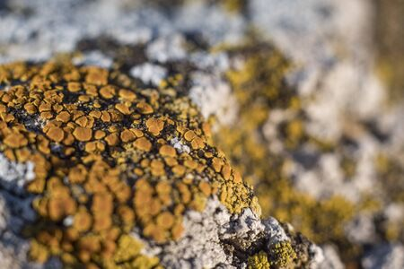 green lichen on the stones