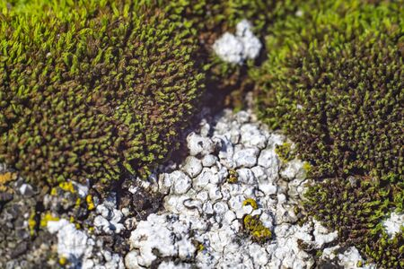green moss grows on stones macro