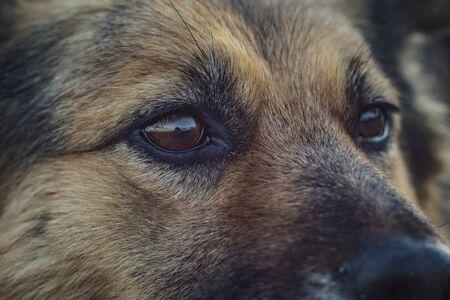 cara de perro de cerca. perro sin hogar Foto de archivo
