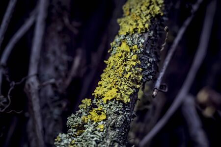 lichen on a vine in a rainforest close-up 写真素材