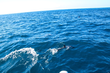 Playing and jumping dolphins in front of the coast of Madeira Stock Photo