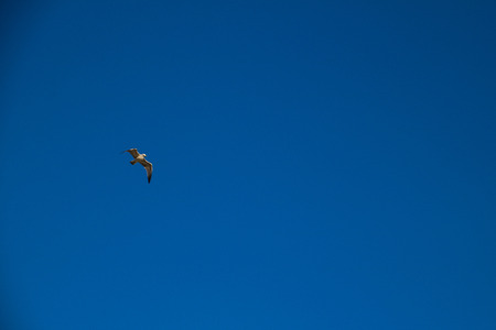 lido: Seagulls of Funchal - Madeira Stock Photo