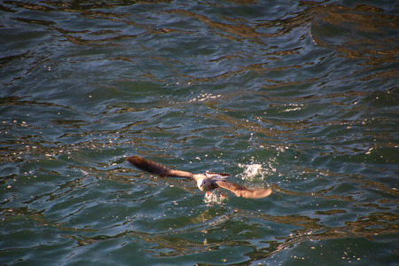 lido: Seagulls of Funchal (Madeira)