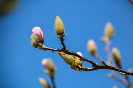 sun energy: Colorful Beauty of spring