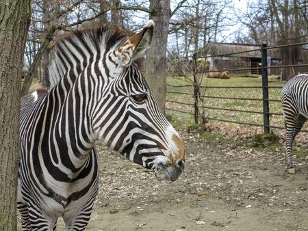 Zoological garden Brno, Czech Republic Stock Photo