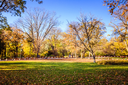 Fall in Türzschanzpark in Vienna, Austria Imagens