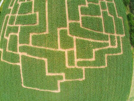 Event maze in the cornfield at Brno-Komin from above, Czech Republic