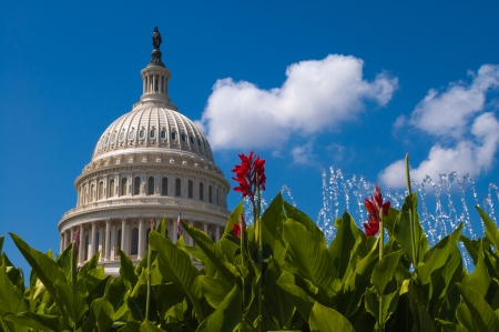 US Capitol Building washington DC with flowers photo