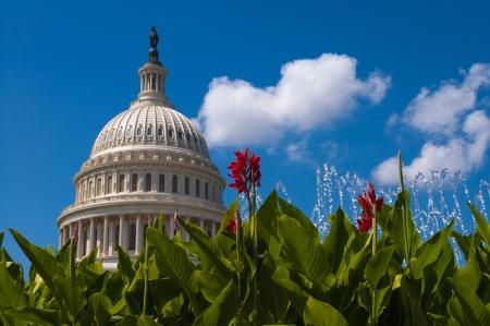 capitol building: US Capitol Building washington DC with flowers