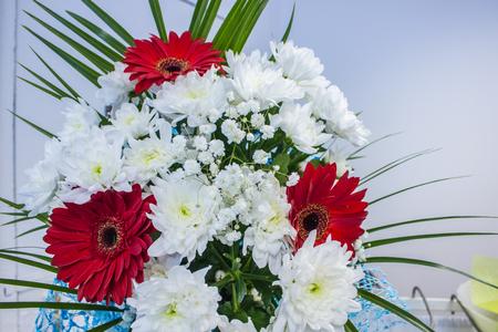 bunch of fresh red gerbera chamomile and white chrysanthemum flower closeup Stock Photo