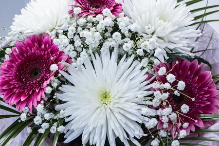 bunch of fresh pink gerbera chamomile and white large chrysanthemum flower closeup Stock Photo