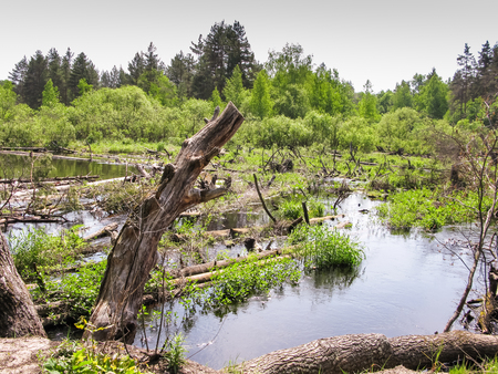Blockage on the river, pine trunks in the water overgrown with grass.
