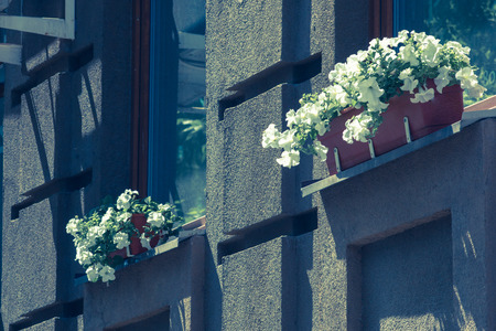 garage on house: White flowers in pots on the windows of a modern building outside Stock Photo
