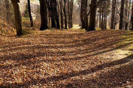 森を抜け快適な方法