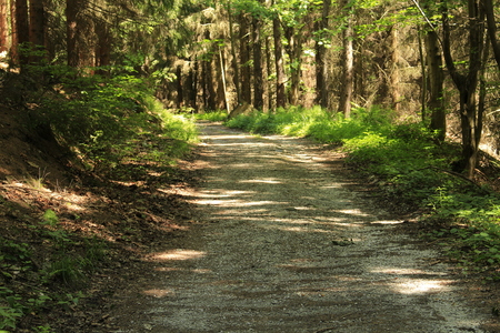 rural road into the forest photo