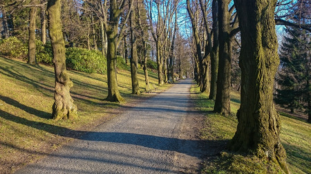 Walkway Lane Path With Green Trees in Forest photo