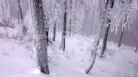 winter trees: Winter trees in mountains covered with fresh snow