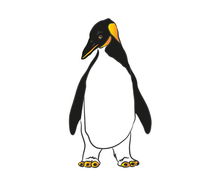flightless: Penguin Illustration
