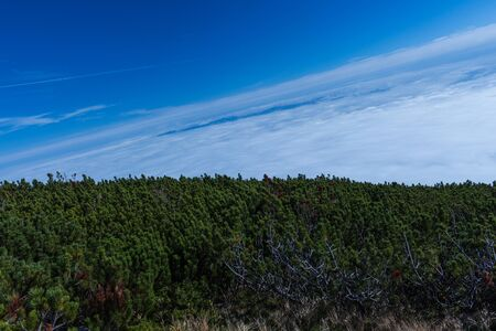 fur trees: Summer landscape in mountains and the dark blue sky with clouds