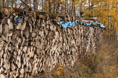 stacked: Firewood stacked in the forest Stock Photo