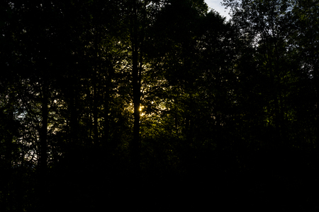 Summer sunrise in the forest landscape view. Summer forest nature.