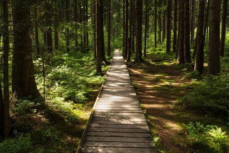 柔らかい春の日差しに照らされた狭い小道。森の木々がある春の森自然の風景