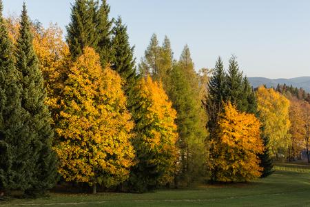 Zomer landschap van jonge groene bossen
