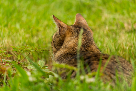 Cropped shot of a brown cat. Cat looking to the side. Cat Close-up, green blurred background