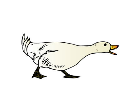 Domestic goose, poultry breeding vector Illustration isolated on a white background.