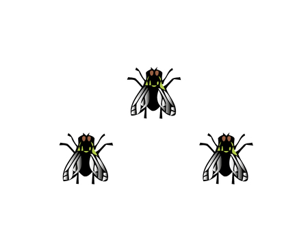 Vector illustration house fly insect black fly isolated on white background.