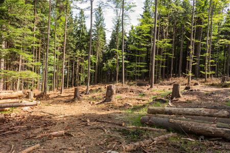 Gran montón de troncos de madera al atardecer listo para la temporada de invierno. Fondo rústico de textura de madera con la palanquilla redonda de troncos de madera picada. Cortar troncos de árboles en el bosque, para calentar en invierno