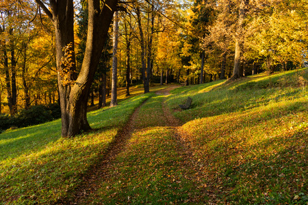 Autumn, Fall scene. Beautiful Autumnal park with pathway. Beauty nature scene. Autumn landscape, Trees and Leaves, forest with bright leaves on trees and bright sun.
