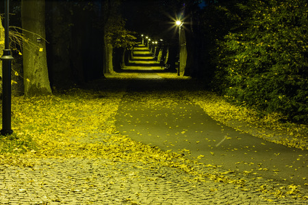 Night park with alley late autumn Stock Photo