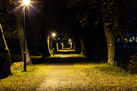 Night park with alley late autumn