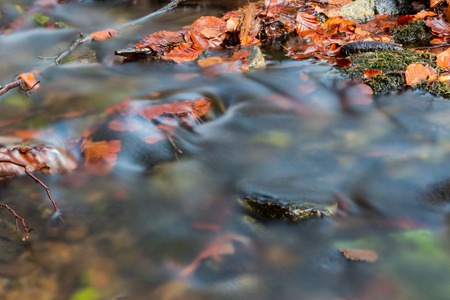 Magical forest waters with wide angle long exposure capture, also available in autumn Archivio Fotografico - 111391947