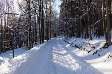 Winter landscape, the road goes into the distance, along the burned down snow-covered trees. Fabulous, mystical photo