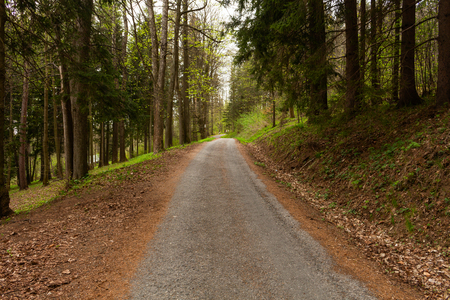 Road in a beautiful forest in the morning Imagens