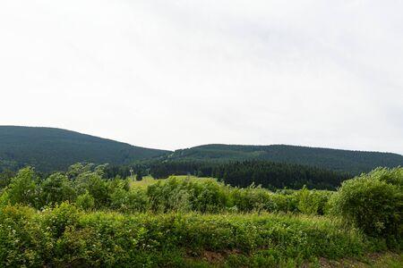 Green spring nature flourishing towards mountain top