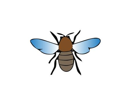 Fly, housefly vector illustration isolated on white background. Shiny insect.