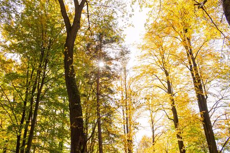 Natures beauty with high rise trees sunlight effect down from trees to earth giving perfect look of forest best to spend some lonely time within this amazing natures beauty.