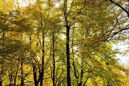 Naturally growing trees thrive in a community that hides many secrets. The magic of nature and deep peace in the forest. The vast forest is full of scents from the needles of tall trees.