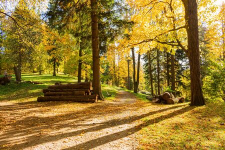 Walk through the pine forest along a narrow winding road. There is amazing silence everywhere, just the noise of trees. A deep forest densely covered with sturdy, solid trees that give a sense of security and safety.