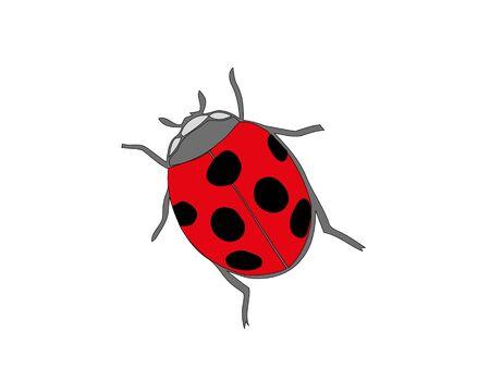 Ladybird on white background. Cute cartoon ladybug icon. Foto de archivo - 137521959
