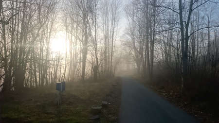 Sunbeams entering coniferous forest on a misty autumnal morning.